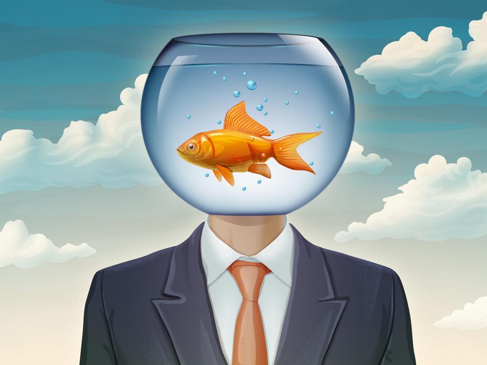 taming the goldfish brain