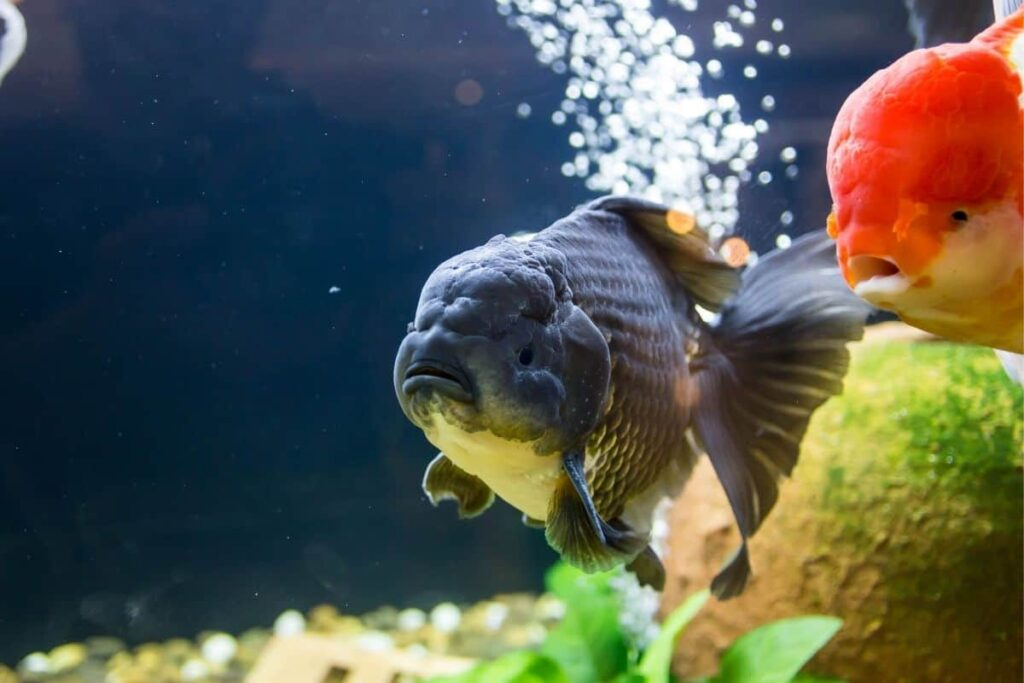 How To Tame The Goldfish Brain